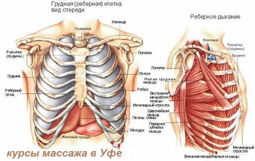 gde-konchaetsya-pishevod-kakaya-to-kostochka